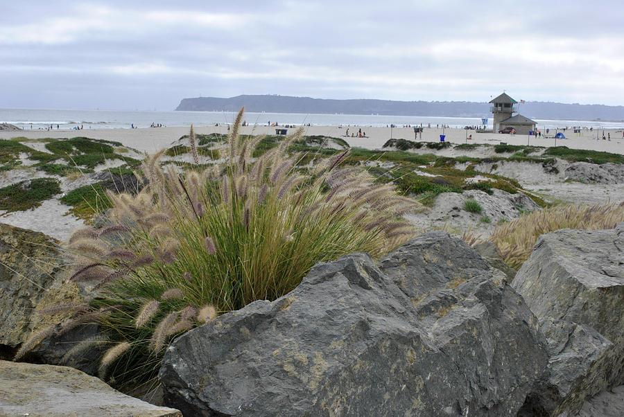 Coronado Island Photograph - Beach At Coronado Island by Misty Stach