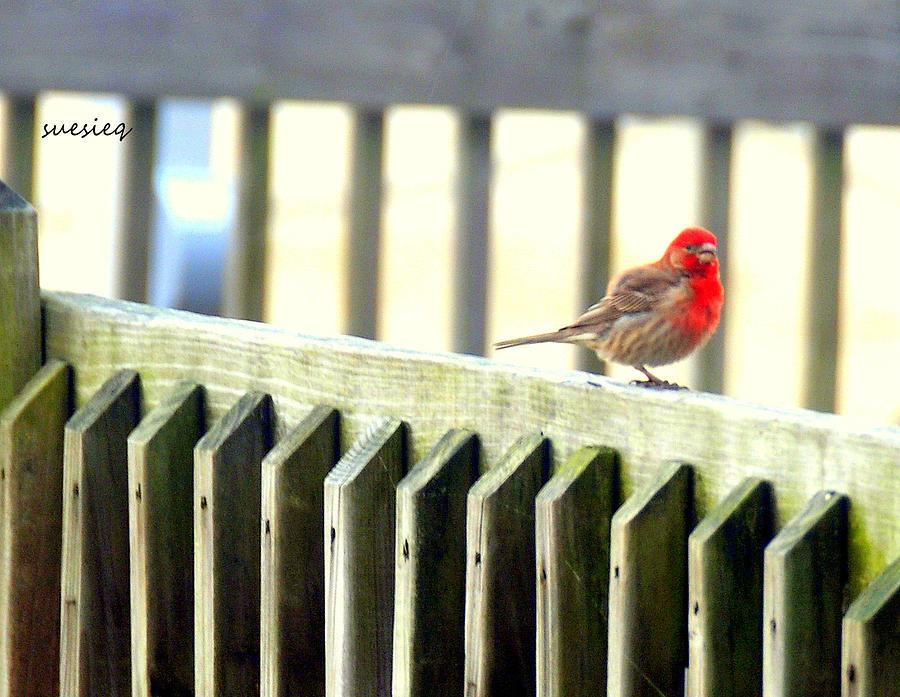 Beach Photograph - Beach Bird by Sue Rosen