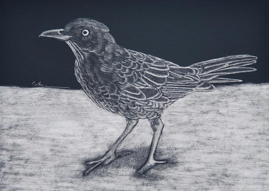 Bird Painting - Beach Bum by Diane Cutter
