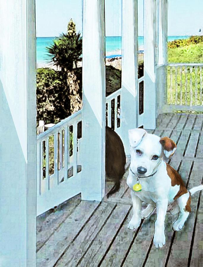 Jane Schnetlage Digital Art - Beach Dog 1 by Jane Schnetlage