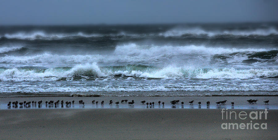 North Carolina Photograph - Beach Feast - Outer Banks Ocracoke by Dan Carmichael