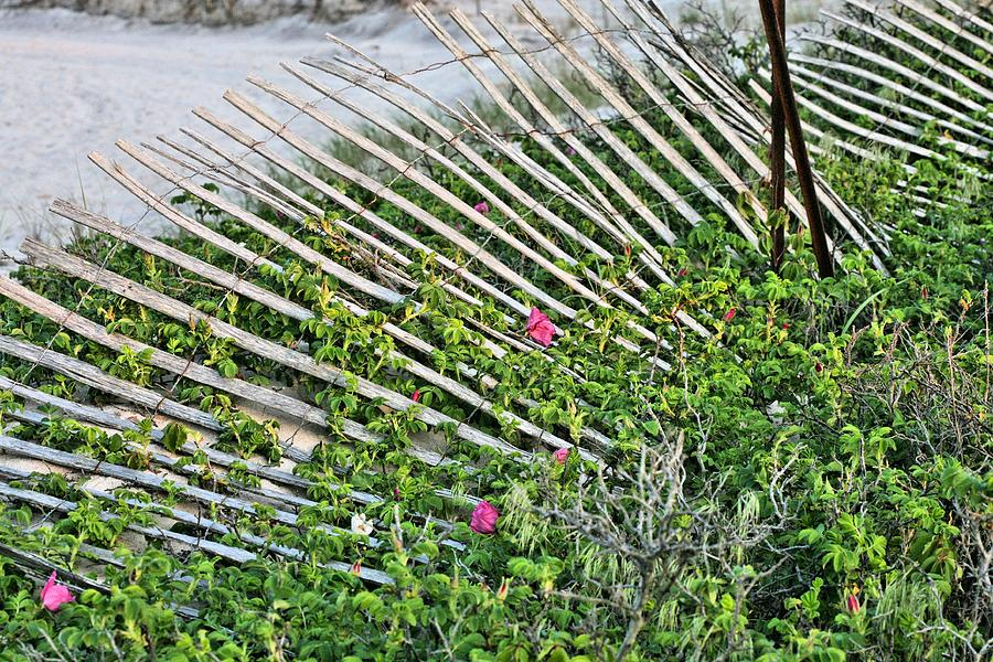 Robert Moses Park Photograph - Beach Flowers by JC Findley