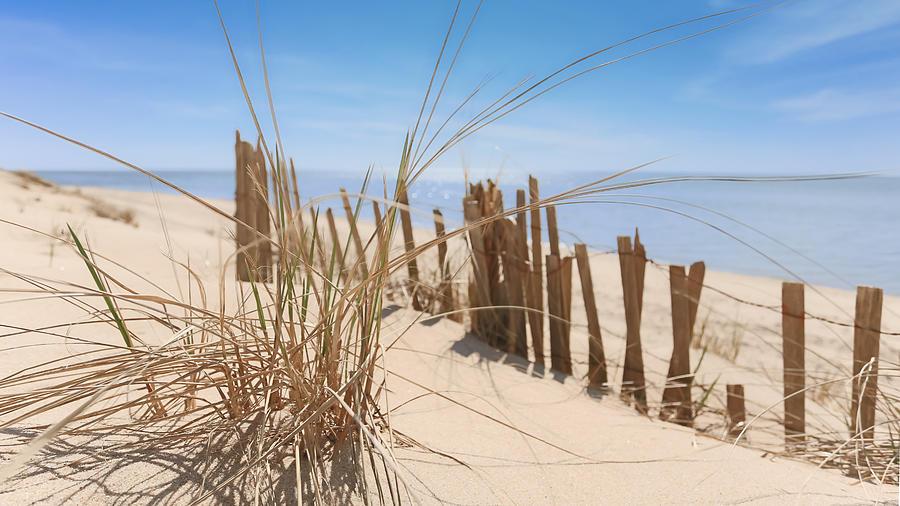 Beach Photograph - Beach Grass II by Dapixara Art