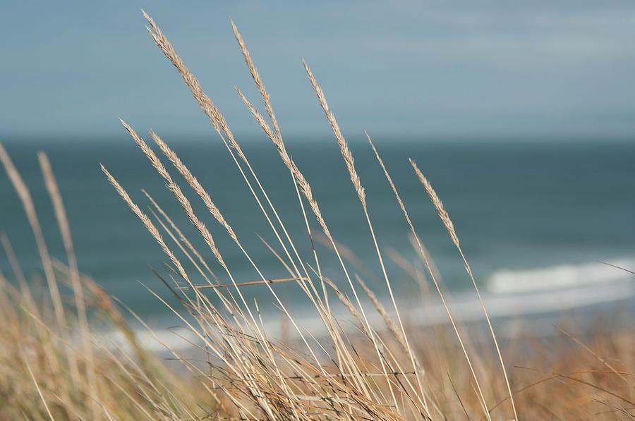 Beach Grass Photograph by Jill Ferry Photography