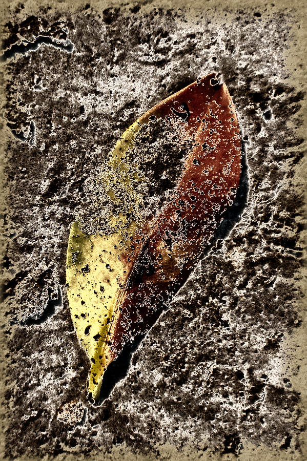 Leaf Photograph - Beach Leaf by Geraldine Alexander