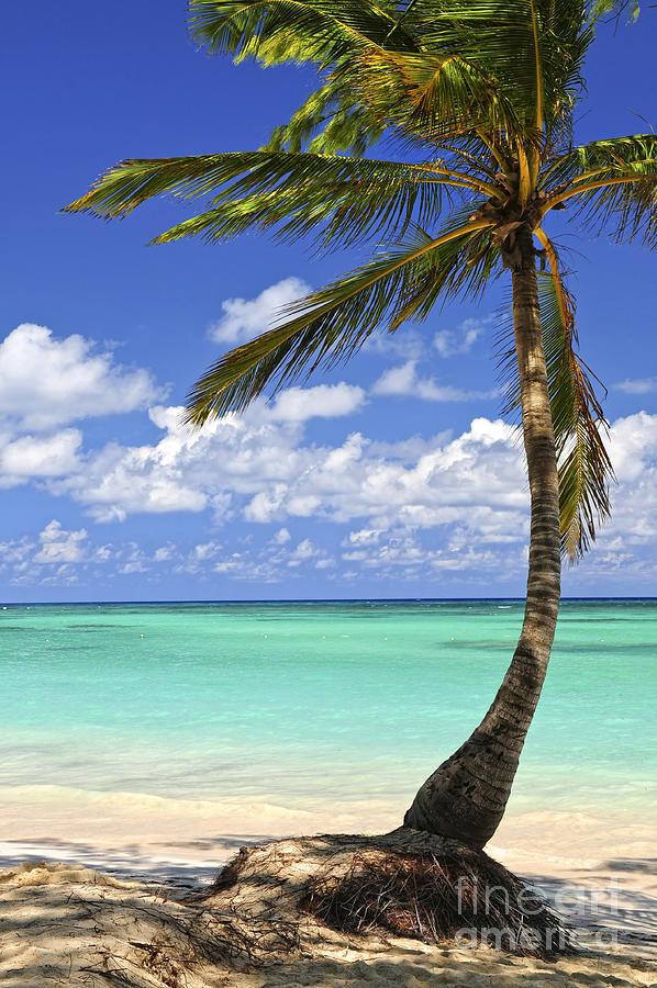 Beach Of A Tropical Island Photograph