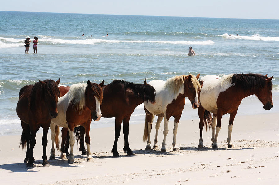 Horses Photograph - Beach Ponies by JB Stran