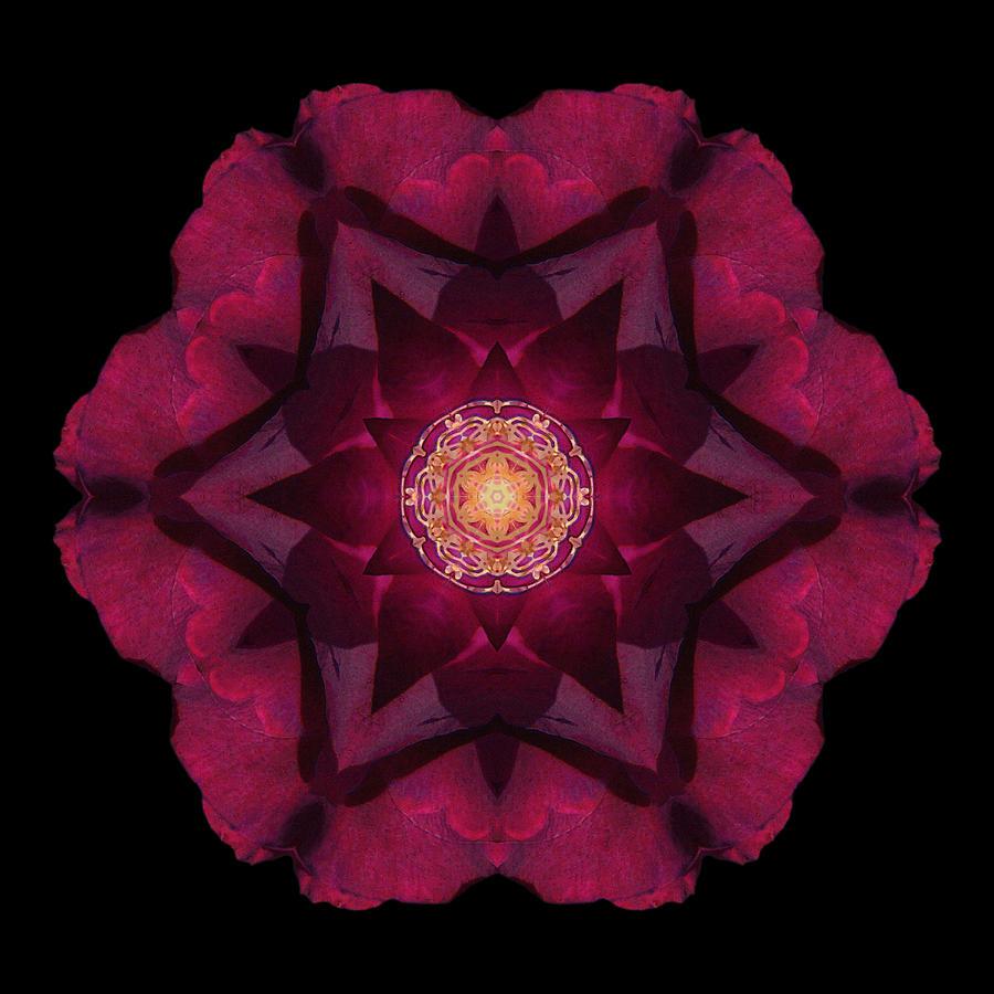 Beach Rose I Flower Mandala by David J Bookbinder