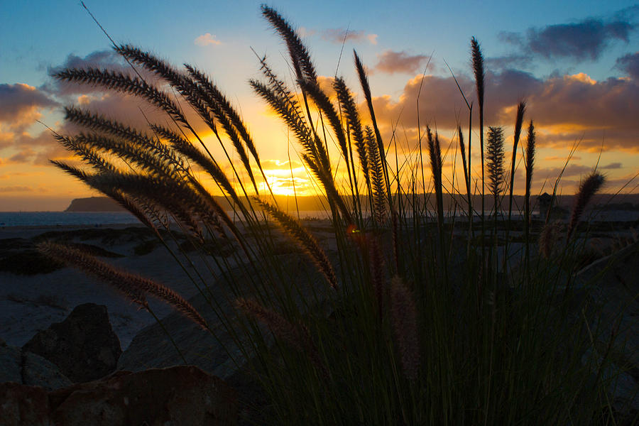 Pacific Photograph - Beach Sunset by Marc Bottiglieri