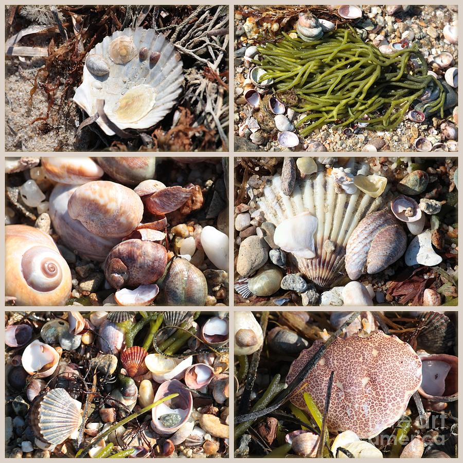 Seashells Photograph - Beach Treasures by Carol Groenen