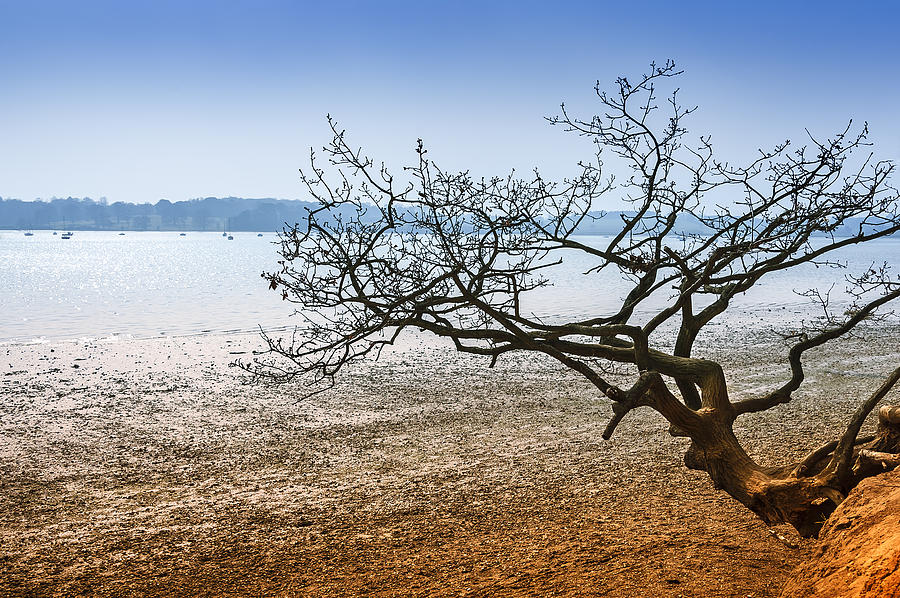 Bay Photograph - Beach Tree by Svetlana Sewell