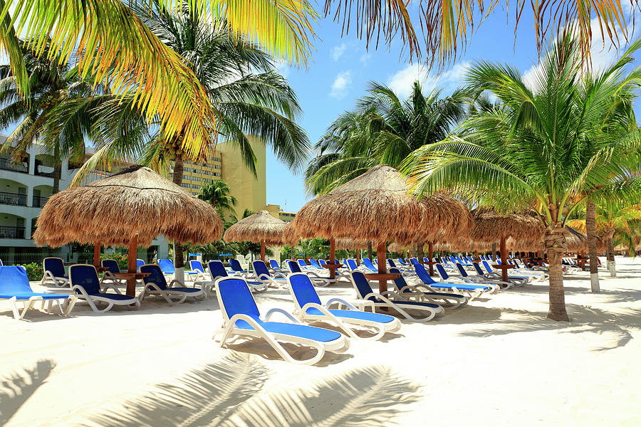 Beach With Palm Trees And Lounge Chairs Photograph by Espiegle