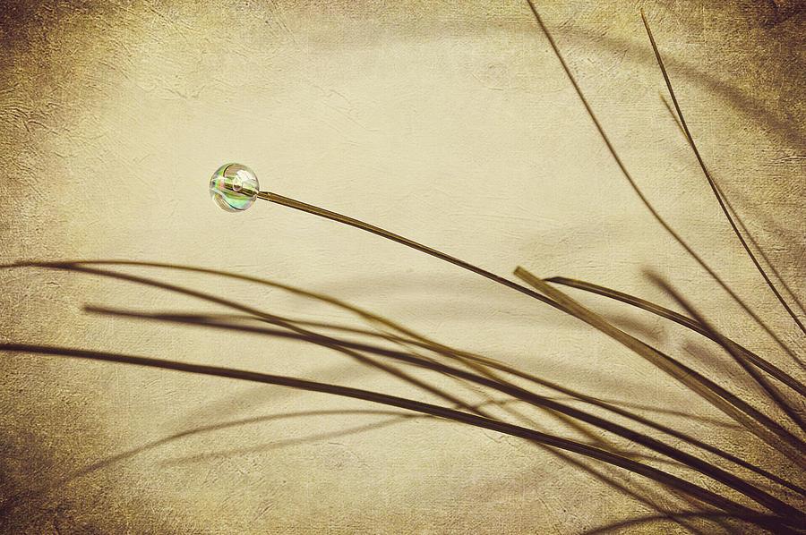 Abstract Photograph - Bead by Svetlana Sewell