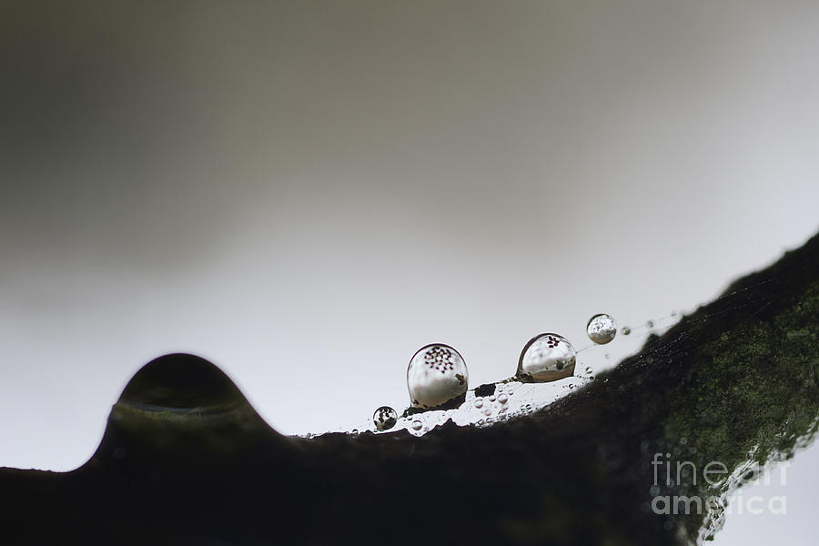 Bead Of Rain Photograph - Beads Of Rain With Particles Floating by Dan Friend