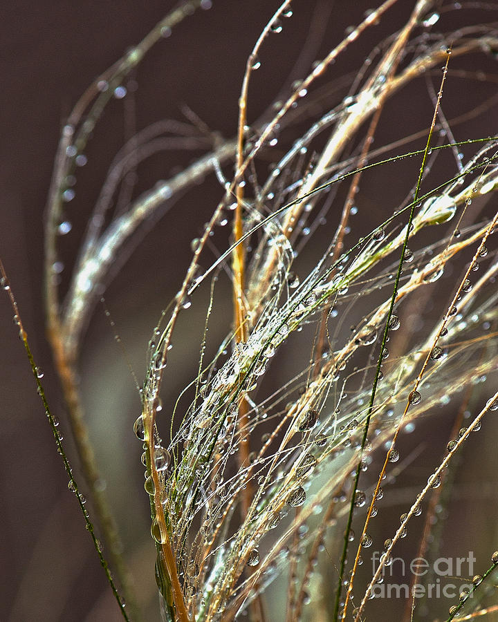 Sea Grass Photograph - Beads Of Water On Sea Grass by Artist and Photographer Laura Wrede