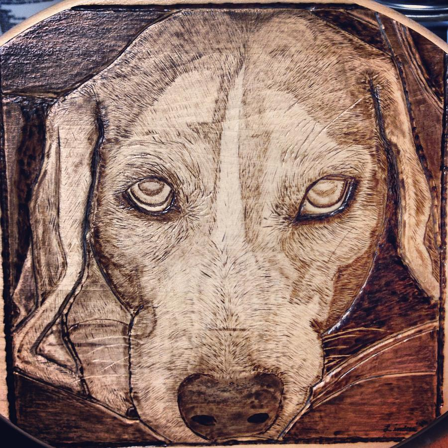 Beagle Pyrography - Beagle Bailey by Lindsee Pitsch