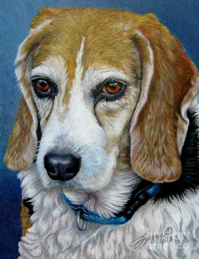 Beagle - Colored Pencil by Beverly Fuqua