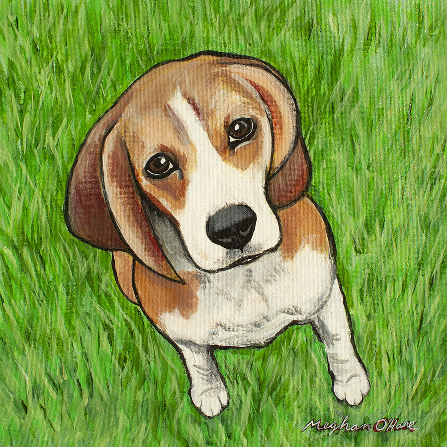 Beagle  by Meghan OHare