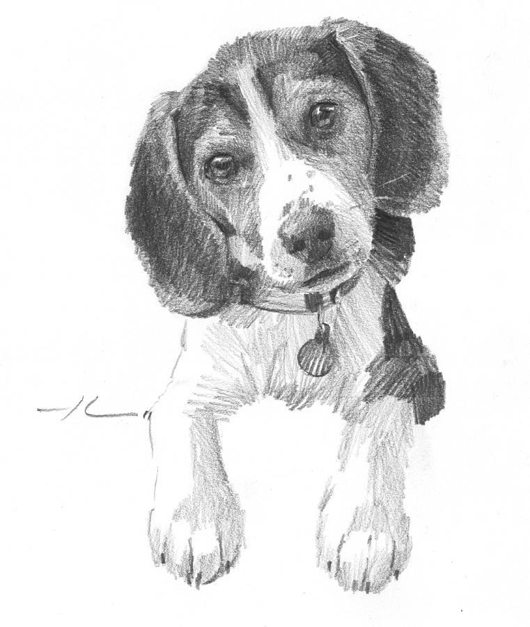 Beagle Puppy Pencil Portrait Drawing by Mike Theuer