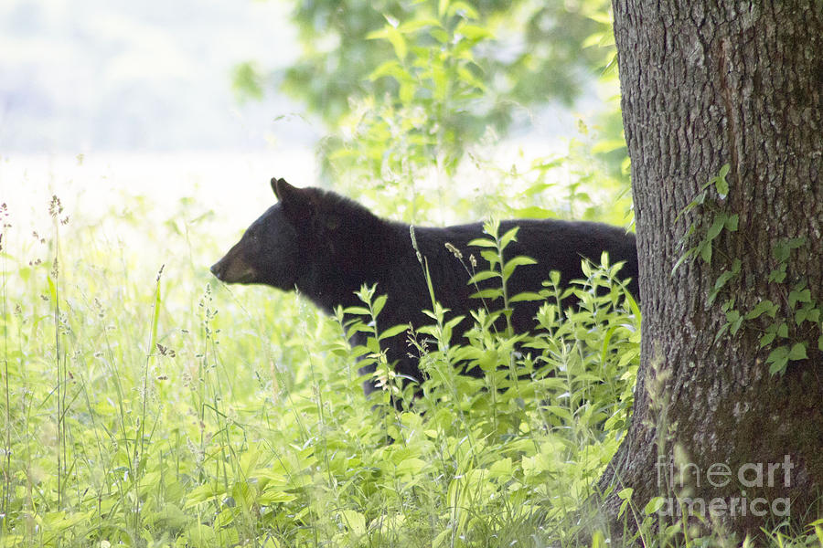 Momma Bear Cades Cove by Cynthia Mask