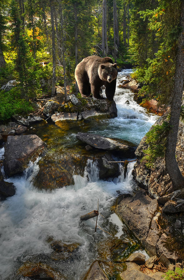 Grizzly Photograph - Bear Necessity by Ken Smith