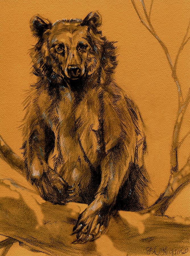 Bear Drawing - Bear Sketch by Derrick Higgins