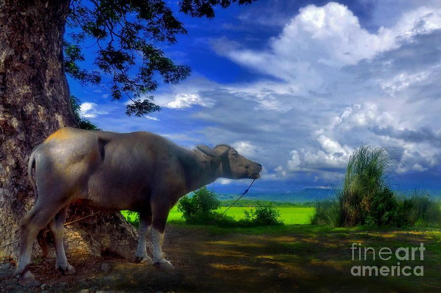 Beast Of Burden Photograph - Beast Of Burden by George Paris