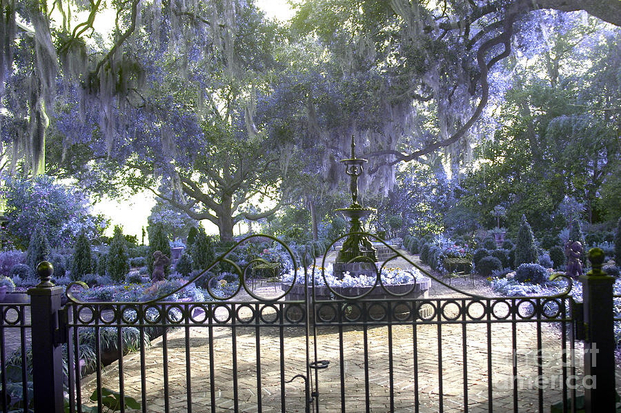 2f6fdeb4079e Beaufort South Carolina Dreamy Purple Lilac Garden Gates ...