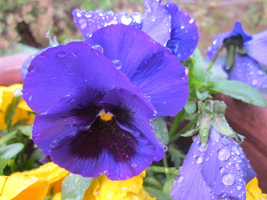 Pense Photograph - Beauties In The Rain by Rosita Larsson