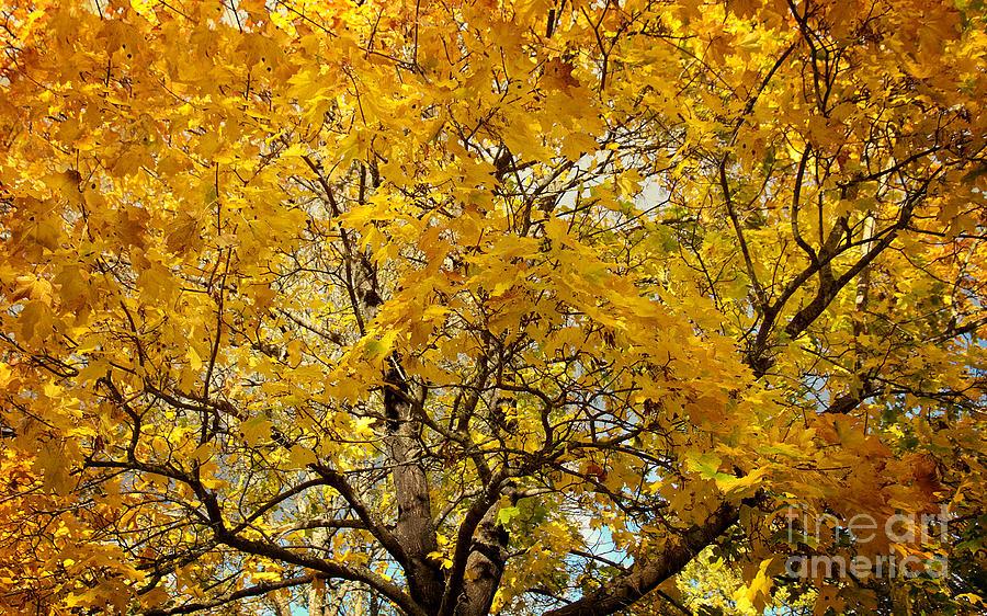 School Event Photograph - Beautiful Autumn Tree by Jolanta Meskauskiene