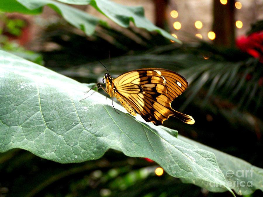 Butterflies Photograph - Beautiful Blessings by Kathy  White