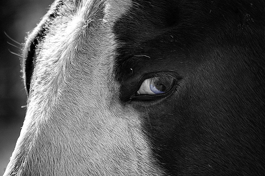 Horse Photograph - Beautiful Blind Soul Horse by Peggy Franz