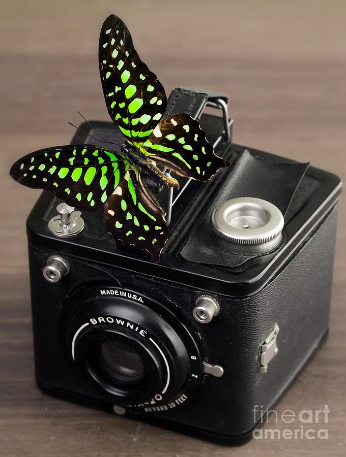 Butterfly Photograph - Beautiful Butterfly On A Kodak Brownie Camera by Edward Fielding