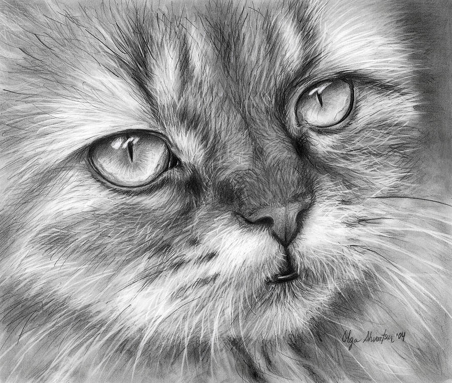 Cat Drawing - Beautiful Cat by Olga Shvartsur