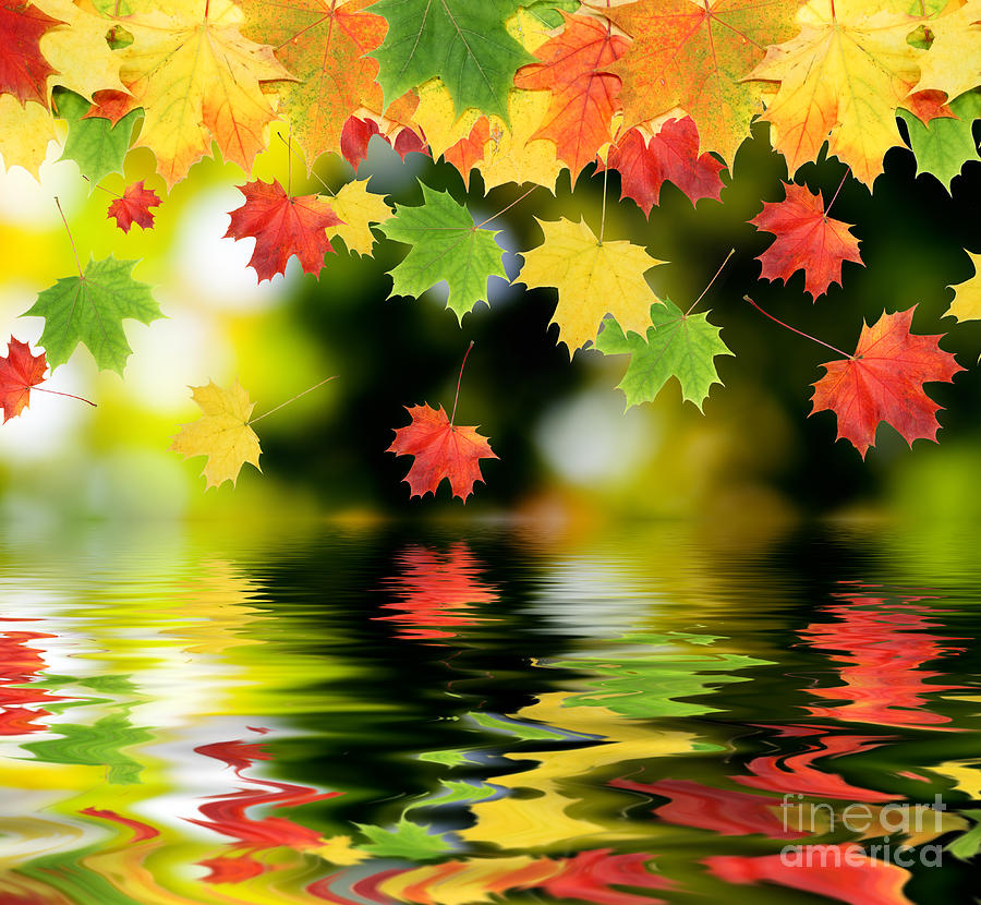 Beautiful Colorful Living Rooms: Beautiful Colorful Leaves Photograph By Boon Mee