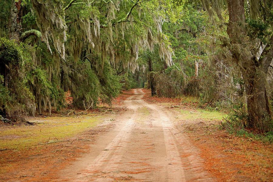 Beautiful Dirt Road Photograph by Daniela Duncan
