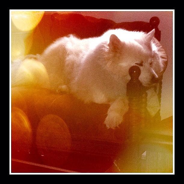 Dog Photograph - Beautiful Dreamer #dog #eskie by Jan Pan