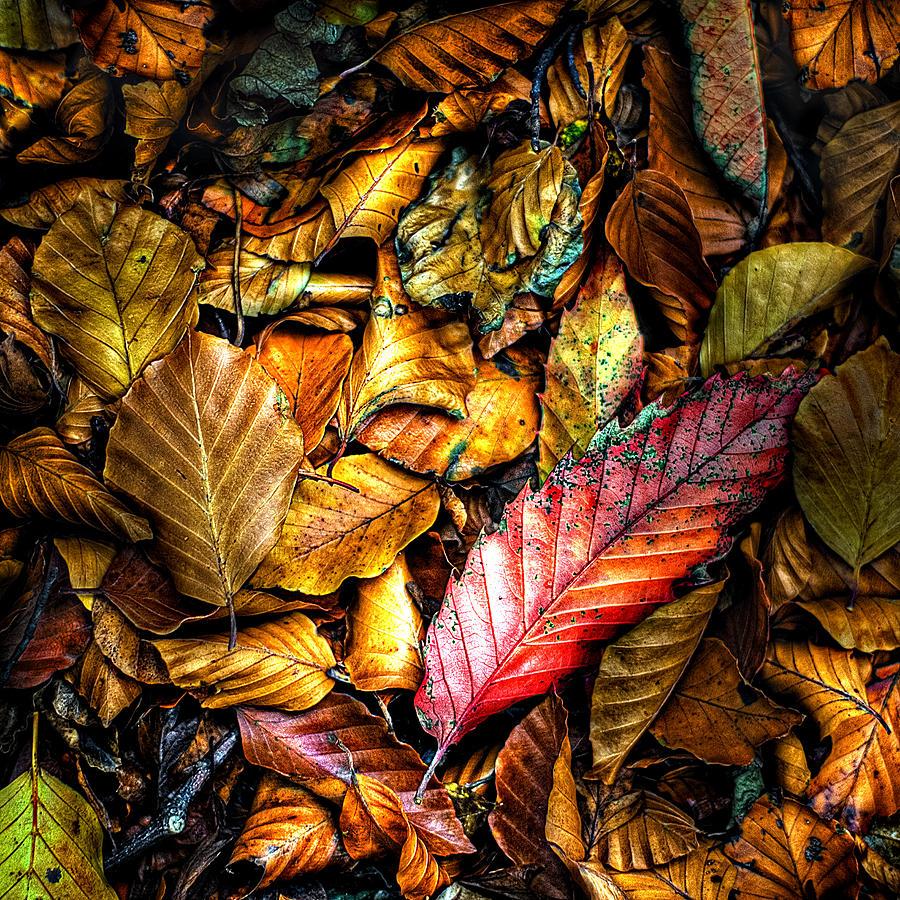 Autumn Photograph - Beautiful Fall Color by Meirion Matthias