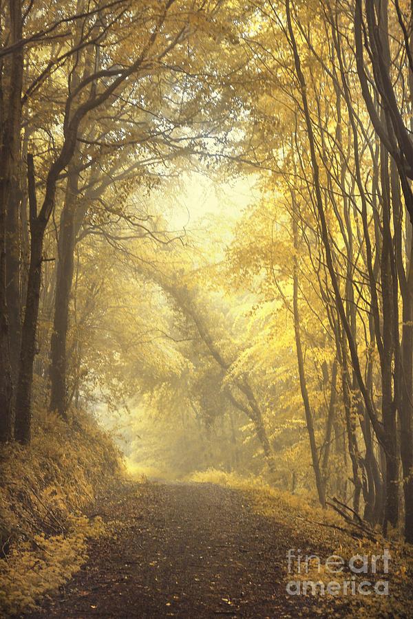 Beautiful Fall Photograph