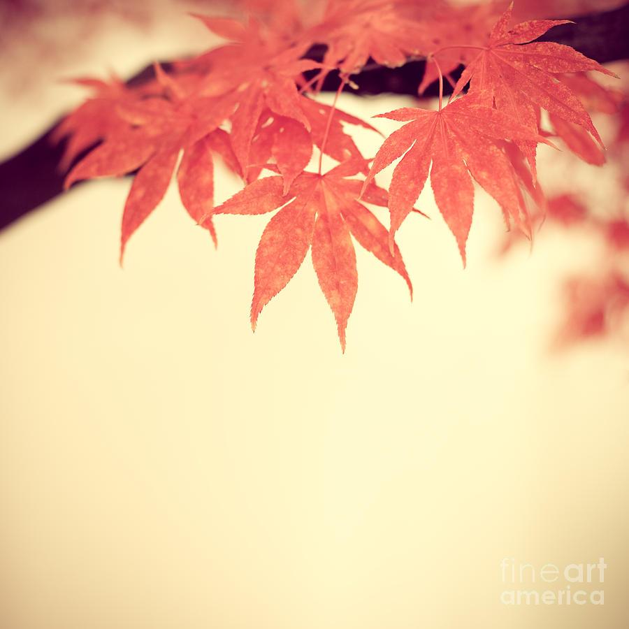 Autumn Photograph - Beautiful Fall by Hannes Cmarits