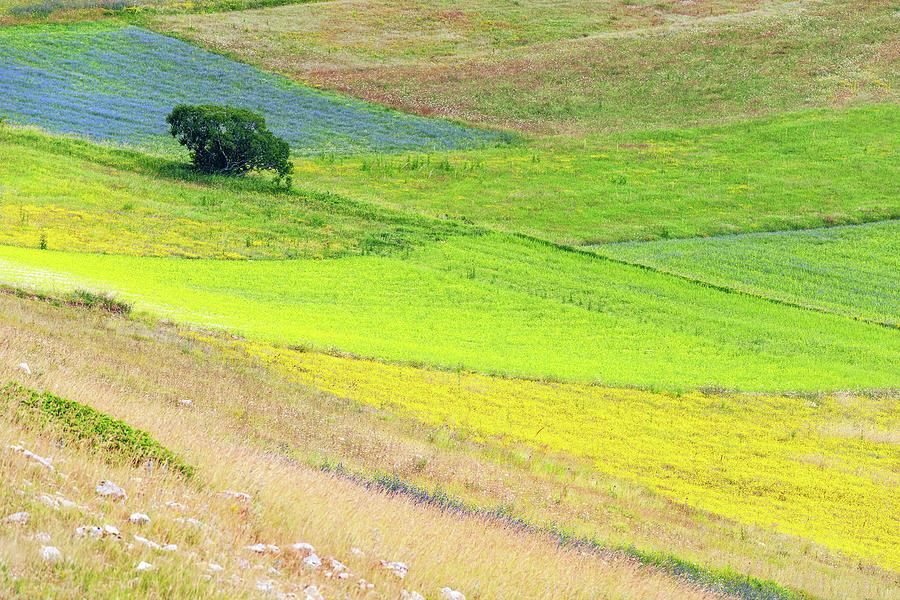 Beautiful Flower Field ,bush, Tree Photograph by Pavliha
