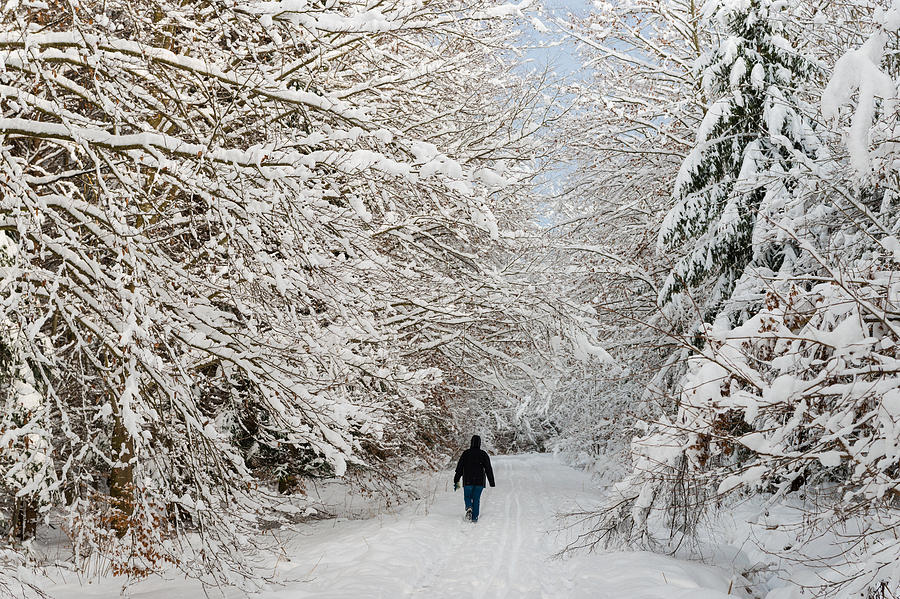 Winter Photograph - Beautiful Forest In Winter With Snow Covered Trees by Matthias Hauser