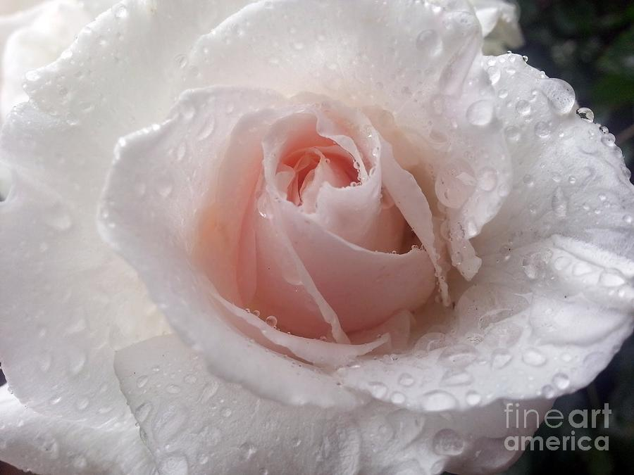 Rose Photograph - Beautiful by Heather L Wright