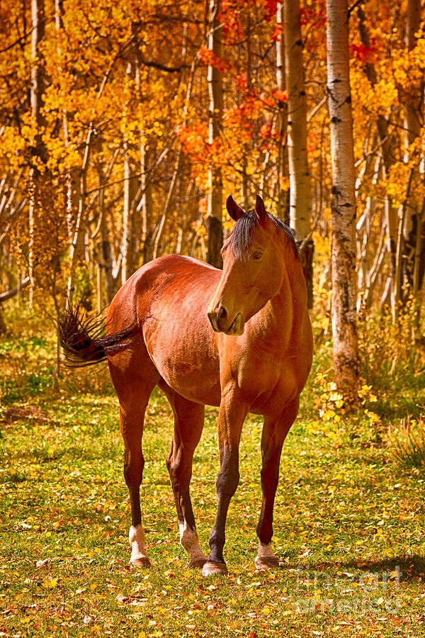 Horse Photograph - Beautiful Horse In The Autumn Aspen Colors by James BO  Insogna