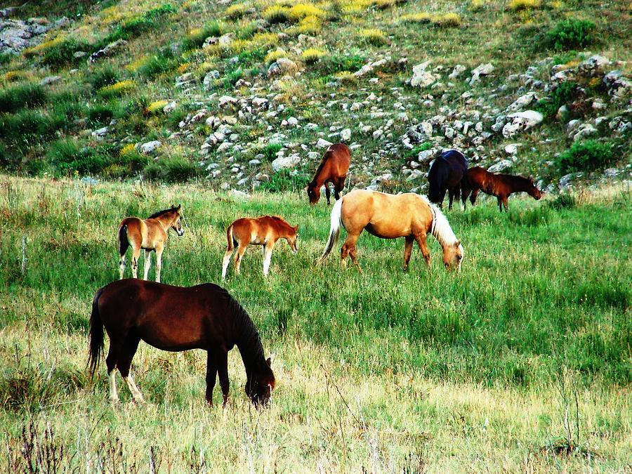 Algeria Photograph - Beautiful Horses by Faouzi Taleb