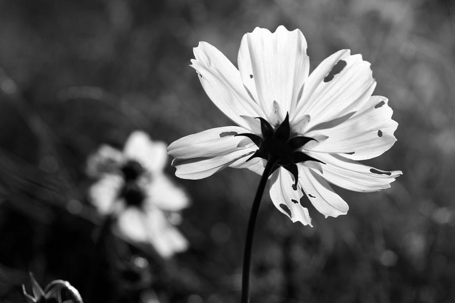 Beautiful Photograph - Beautiful Imperfection  by Nathaniel Kidd