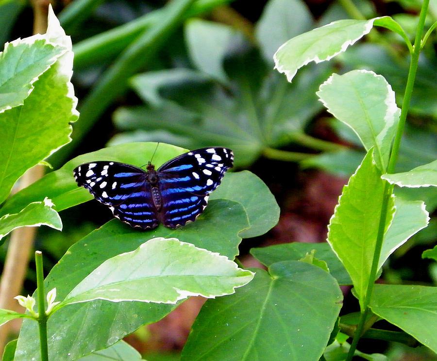 Nature Photograph - Beautiful Inside by Judy Wanamaker