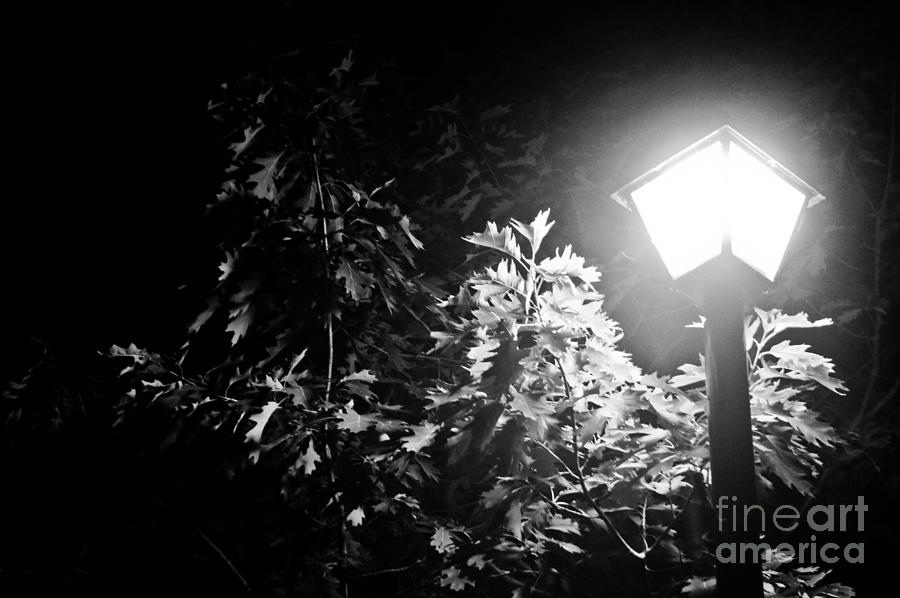 Woods Photograph - Beautiful Lamp Light In The Dark by Fatemeh Azadbakht
