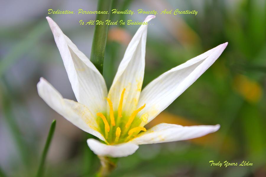 Beautiful Lily Flower Photograph