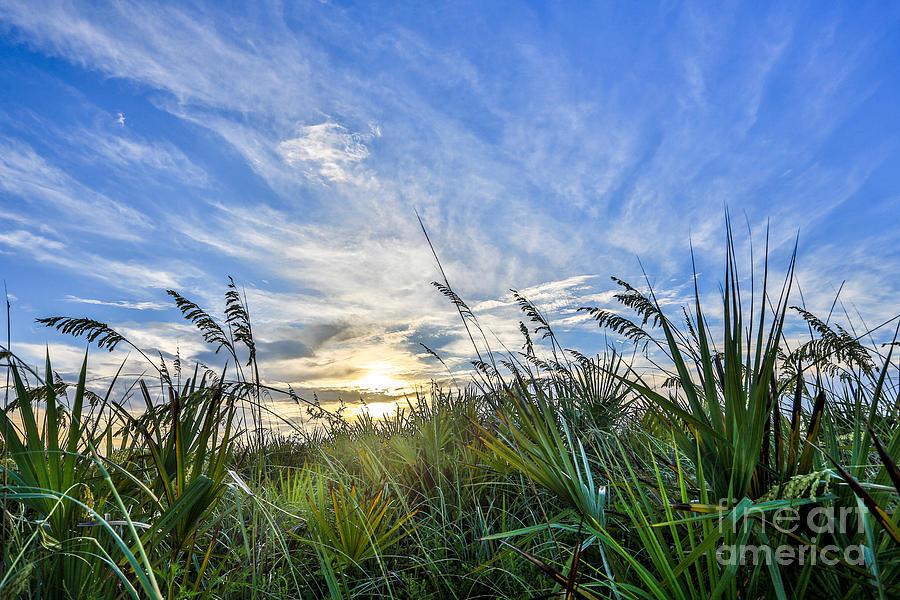 Grass Photograph - Beautiful Morning by Mina Isaac